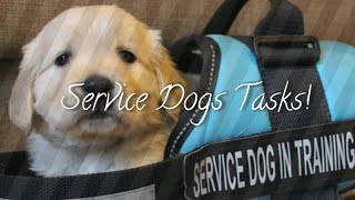 All Of My Service Dogs Tasks!