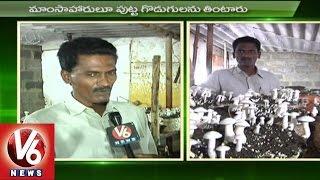 Mushroom Plantation Techniques | Agriculture News | Sagubadi | V6 News