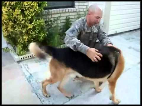 Cão vai buscar a bola e reencontra seu dono