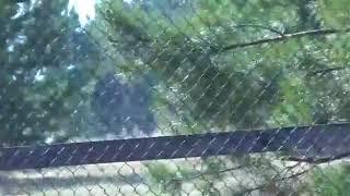 Японский журавль Жорик с поломанным клювом