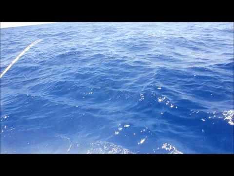 Rockport Offshore Challenge PortAfino
