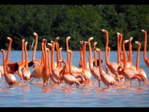 أول محمية للطيور في دبي