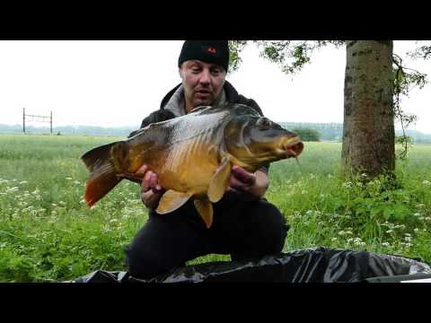 French channel Carping