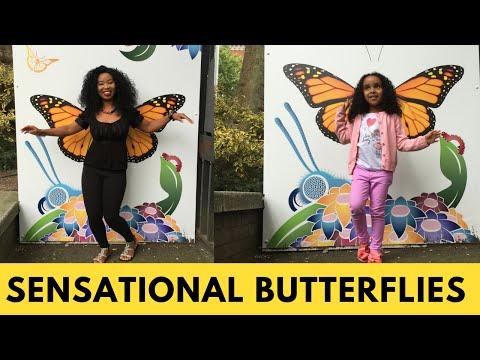 Natural History Museum - Sensational Butterflies - Family Outing London - Butterflies Exhibition