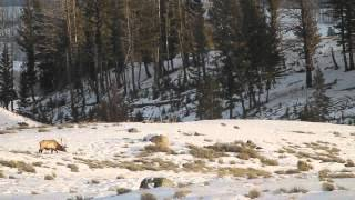 Elk Country Chronicles January 2014