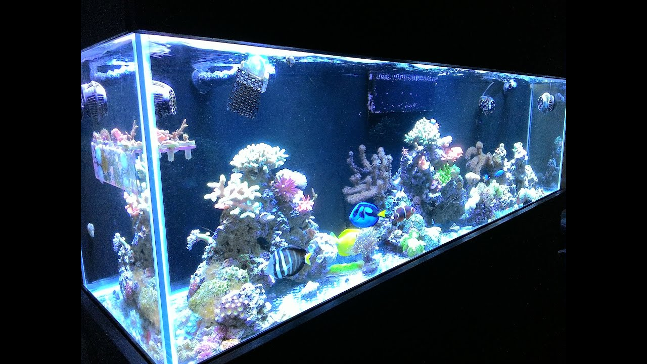 how to add water to reef tank