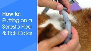 How to put on a Seresto Flea and Tick collar for dogs and cats