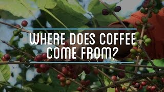 Happy #NationalCoffeeDay! Where Does Coffee Come From?