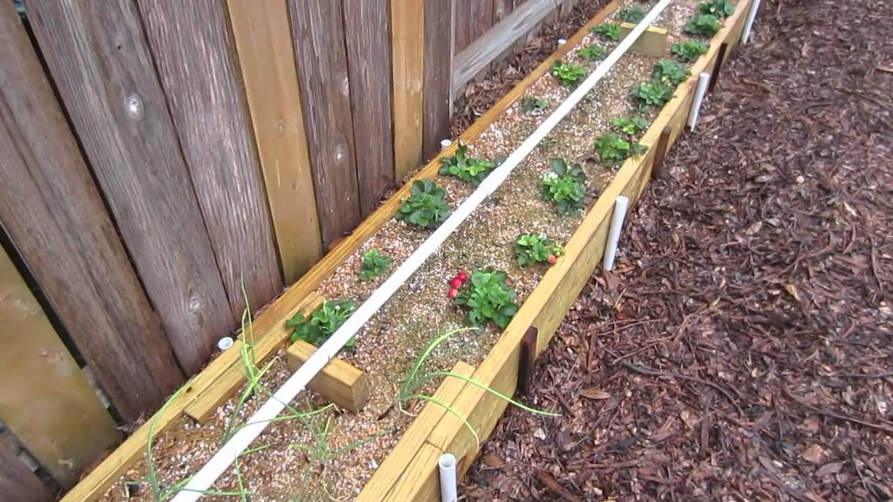 Mittleider gardening method winter garden week 12 youtube - Gardening mistakes maintaining garden winter ...