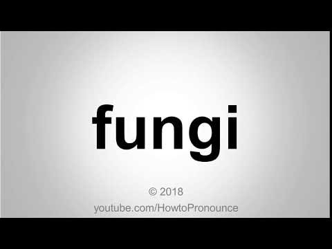 Download How To Pronounce Fungi Mp3 Download 320kbps