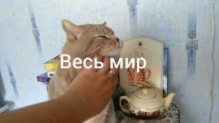 Общаюсь с котом как кошачий переводчик. Говорящий кот! Говорящего кота - не переговорить! Сибирский?