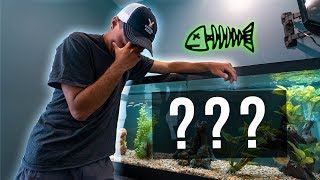 Update video on the NEW Fish Tank....