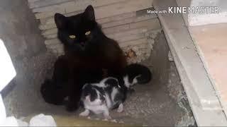 Прибилась кошка с котятами.