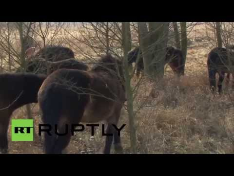 Czech Republic: WILD HORSES return to central Europe after 1000 years