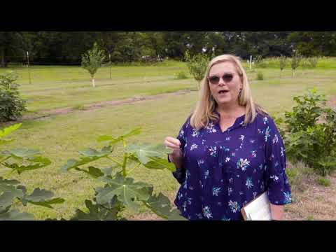 Fruit Tree Demonstration