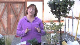Gardening Tips : How to Prune a Crape Myrtle Into a Tree