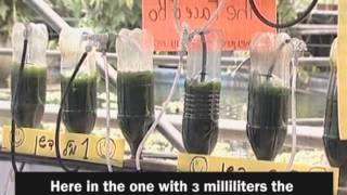 Micro Algae Co-educational project in Israel.mpg