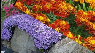 Посмотрите Фото и Названия растений для альпийской горки