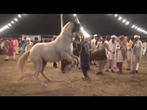 horseback-riding-near-me- -pony- -horse- -schleich-گھوڑے- -horse-dance