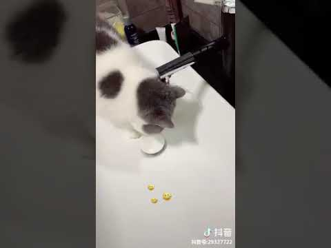 Cat Series: Cat is playing water in the basin