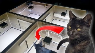 CAT in AUTOMATIC ESCAPE ROOM  Can it SOLVE ALL THE PUZZLES?