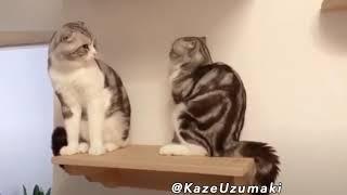 Was Tiere So Denken 77
