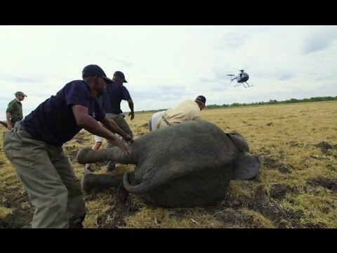 Malawi elephant relocation