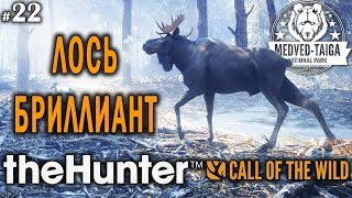 theHunter call of the wild #22 🔫 - Лось-Бриллиант - Винтовка - Медведь, Кабан, Рысь, Лось, Кабарга
