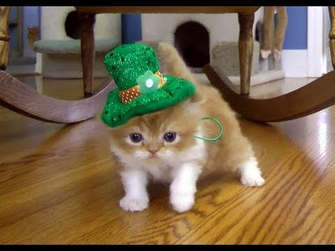 Chocolate Day Hd Wallpaper St Patrick S Day Leprechaun March Youtube