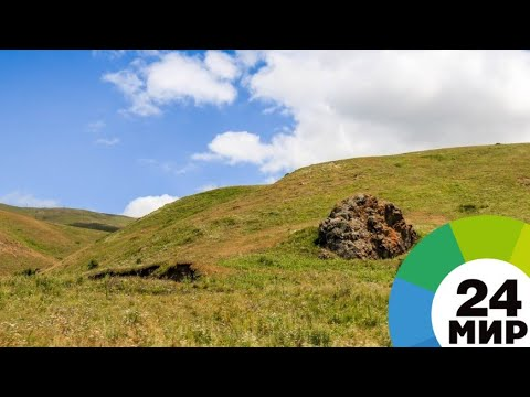 Еда и лекарство: армянские хозяйки готовят блюда из полезных трав - МИР 24