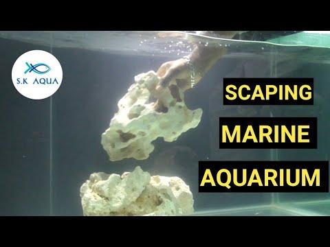 How To Scape A Marine Aquarium? [TAMIL]