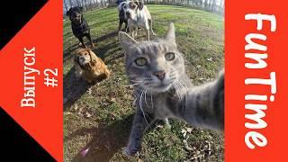 Подборка приколов с животными. Видео, приколы про кошек и собак. #2