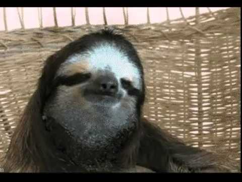 Deal With It Sloth - YouTube