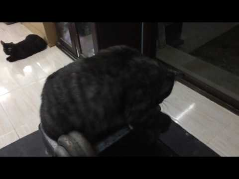 How Cats Play With The Gym Equipment