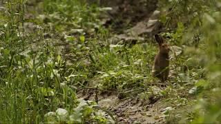 Выпуск зайца в природу