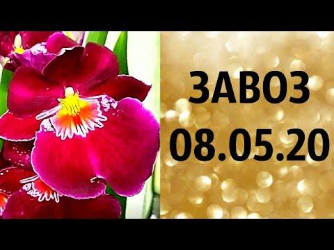 🌸Продажа орхидей. ( Завоз 08 05 20  г.) Отправка только по Украине. ЗАМЕЧТАТЕЛЬНЫЕ КРАСОТКИ👍