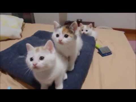 The Kitten Dance!