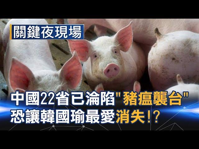 當中國22省已淪陷 「豬瘟襲台」恐讓韓國瑜最愛的滷肉飯消失!?Part4《關鍵夜現場》