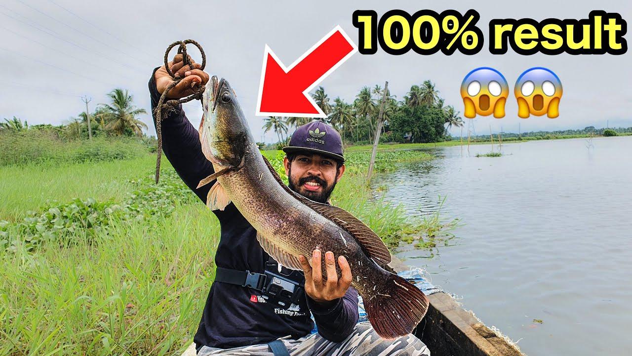 💥കുട്ടനാട്ടിലെ വാഹ.. ഒരു ഒന്നൊന്നര മീൻ | kerala snakehead fishing and cooking