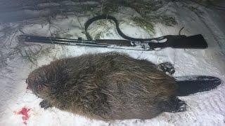 Охота на бобра ночью с ружьем
