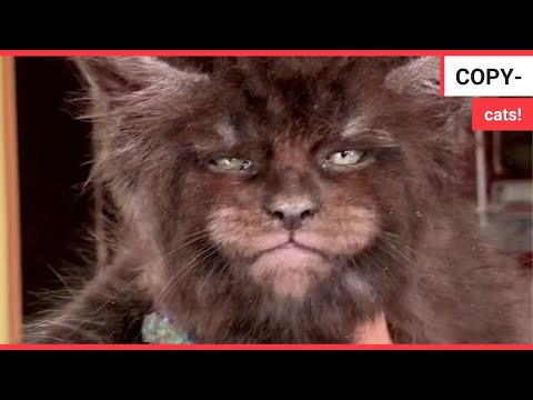 Bizarre footage shows kittens with human faces   SWNS TV