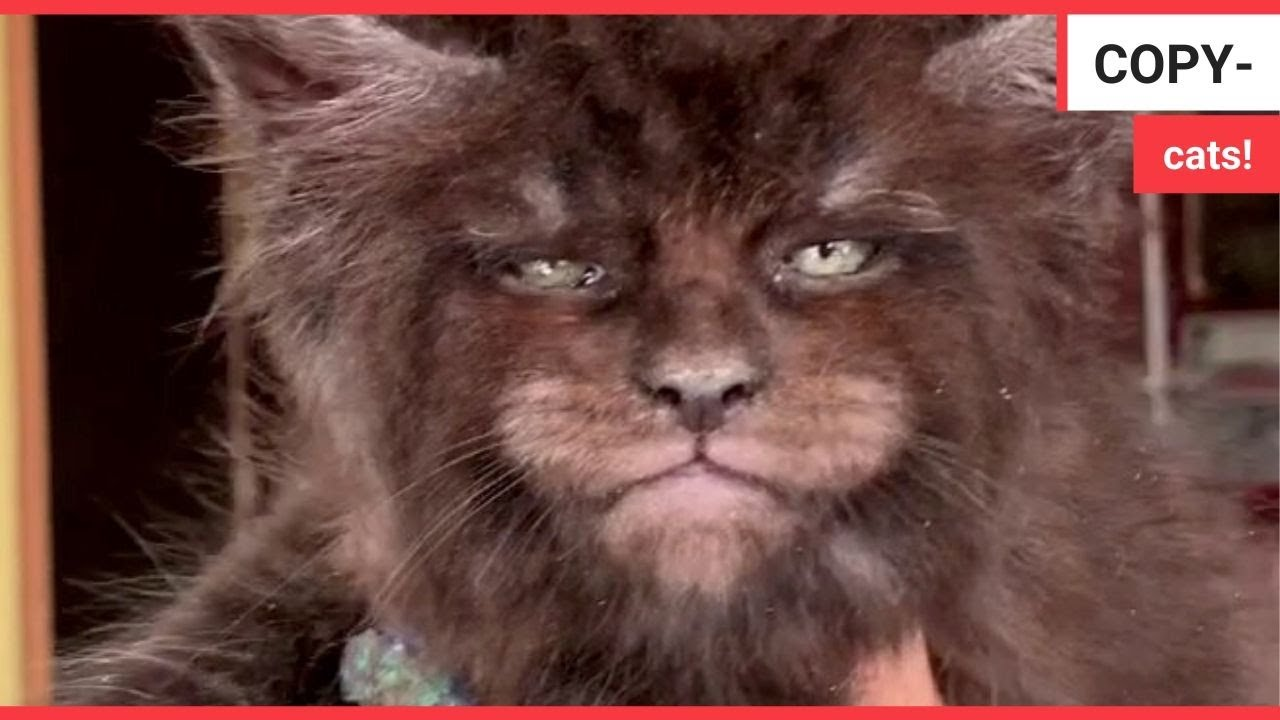 Bizarre footage shows kittens with human faces | SWNS TV