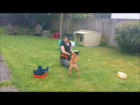 Euan Border Terrier Tissue Retrieval