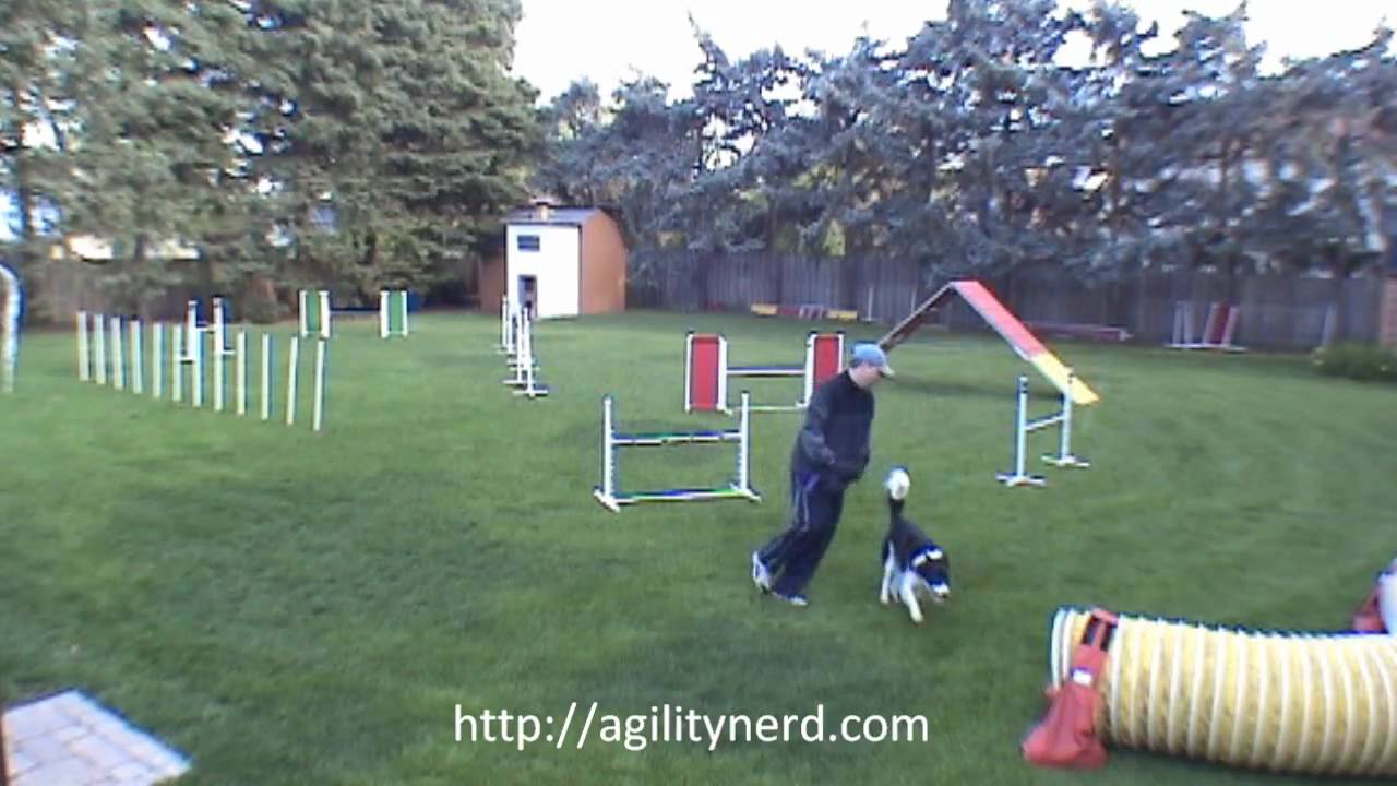- 3 Masters Backyard Dog Agility Sequences - Annotated - YouTube