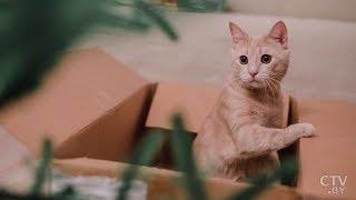 Как легко избавиться от кошачьего запаха? Что нельзя использовать ни в коем случае? Полезные советы