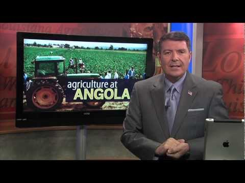 Agriculture at Angola