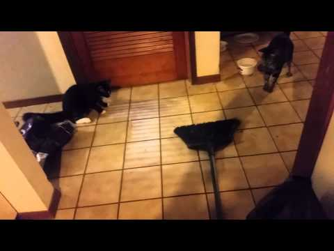 Cats jumping over broom