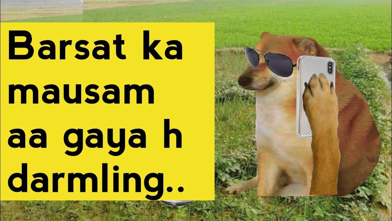 Dogi ?? -- Drunk man funny call recording - Thanos Doge