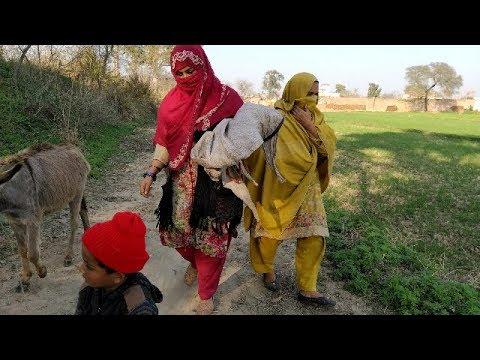 Donkey Riding 😂😂😂😝 Punjab Village Life Evening Routine,cow K Lia Chara