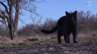 В Севастополе прививают диких животных от бешенства